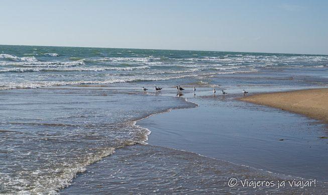 Playa virgen de Doñana